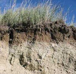 Специально разработанные почвы помогут в борьбе с потеплением климата
