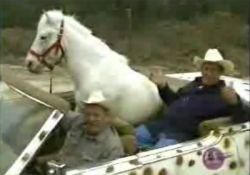 Самая домашняя лошадь в мире (видео)