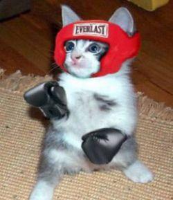 Боксирующий кот (видео)