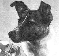 Почему первыми советскими космонавтами стали собаки?