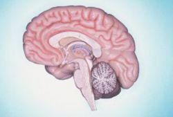 Ученые раскрыли причину агрессивности подростков