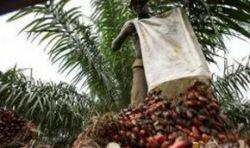 Биотопливо – преступление против человечества