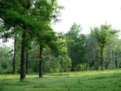 Леса Подмосковья уйдут с молотка?