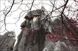 Shilin - каменный лес в Китае (фото)
