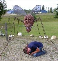 Как избежать укусов насекомых