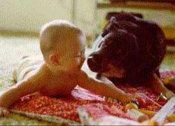 Собаки уберегут детей от гипертонии