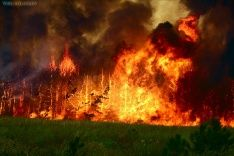 Лесные пожары охватили Россию