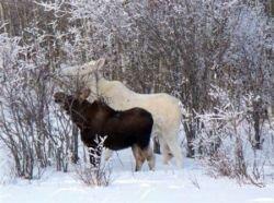 Альбиносы в дикой природе (фото)