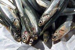 Экологи просят Генпрокуратуру заступиться за Азовское море