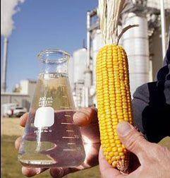 Европейские эксперты выступают за сокращение использования биотоплива
