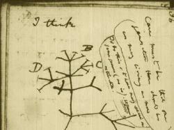 Рукописи Чарльза Дарвина появились в интернете