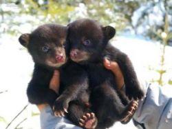 Операция по спасению медвежьей семьи (фото)
