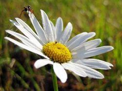 Швейцарская комиссия по этике призывает не рвать цветы
