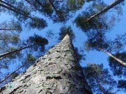 В Японии запущен завод по производству биотоплива из коры деревьев