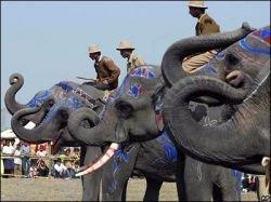 В Индии начался грандиозный фестиваль слонов