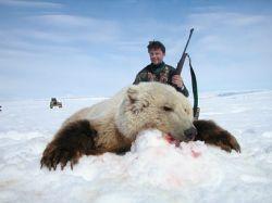 Половину медведей Камчатки отстреляют иностранцы