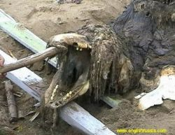 На Сахалине нашли тело животного, похожего на плеозавра (фото)