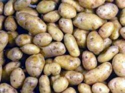Самый дорогой картофель в мире выращивают на французском острове
