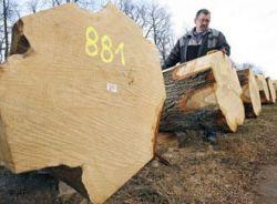 В ЕС процветает нелегальная торговля древесиной