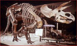 Самый дорогой в мире скелет продан почти за 600 тысяч евро