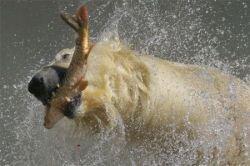 Репортаж из питерского зоопарка (фото)