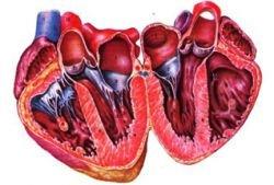 Сердечные клапаны теперь можно менять без операции