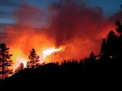 В этом году по сравнению с прошлым площадь лесных пожаров в России выросла в тридцать раз