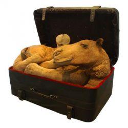 Мертвые животные в современном искусстве (фото)