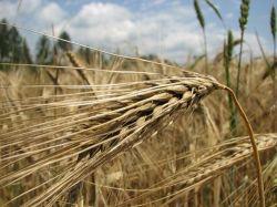 В Европе резко подскочили цены на аграрные земли