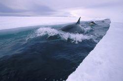 Дебаты по поводу Арктики могут привести к вооруженному конфликту