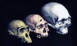 Человечество было обречено на вымирание