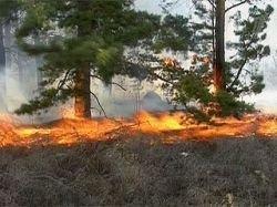 Новые очаги лесных пожаров могут возникнуть в нескольких регионах России