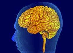 VibrantBrains - тренировочный центр для мозга