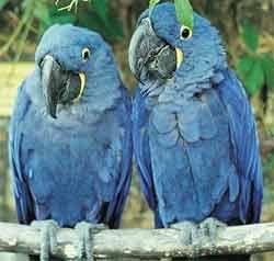 В Мексике принят закон, запрещающий сажать рожденных на воле попугаев в клетки