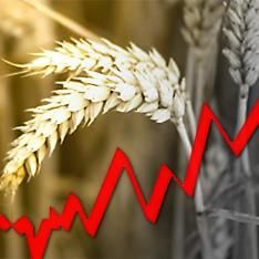 Продовольственный кризис. Коллекция фактов