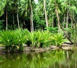 Уже через 12 лет Нигерия может остаться без леса