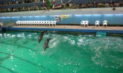 Дельфин-артист погиб на глазах у зрителей