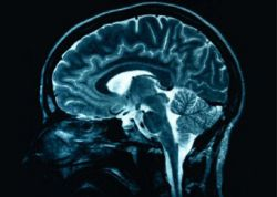 Не пытайтесь запомнить более четырех вещей, говорят ученые