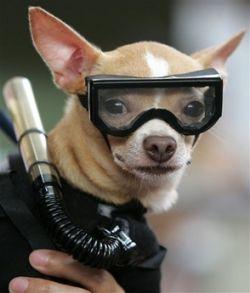 Фото с выставки собак в Маниле (фото)