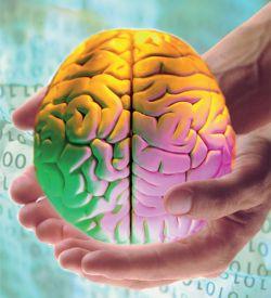 Создана программа для «разгона» интеллекта