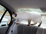 Испугавшийся кот в салоне автомобиля побудил принять новый закон в Калифорнии