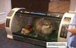 7-звездочная гостиница для домашних животных (видео)