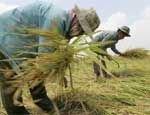 Китай хочет взять в аренду бесхозные земли в России