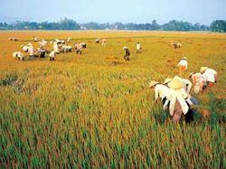 Тайланд, Мьянма, Лаос, Вьетнам и Камбоджа создают сообщество экспортеров риса