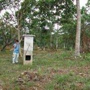 Пасеки для летучих мышей призваны спасти леса