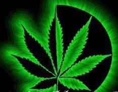 Американские медики считают, что марихуана может применяться в лекарственных целях