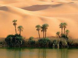 Эмиратцы решили озеленить свою страну