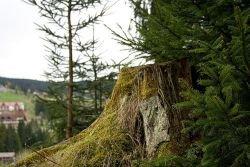 Прокуратура остановила вырубку Химкинского леса