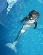 Впервые морскому животному был установлен протез