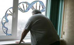 Найдена вторая генная комбинация, ответственная за ожирение